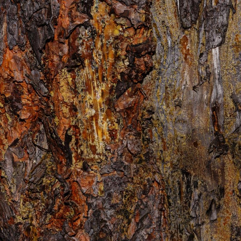 slipper elm bark detox