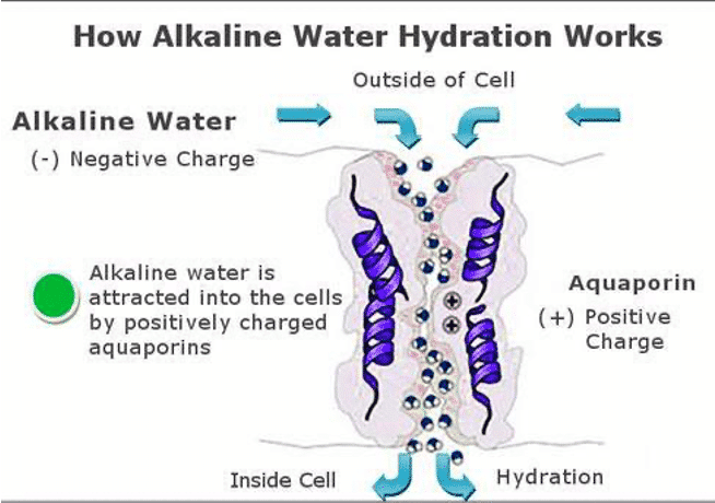 how alkaline hydration water works